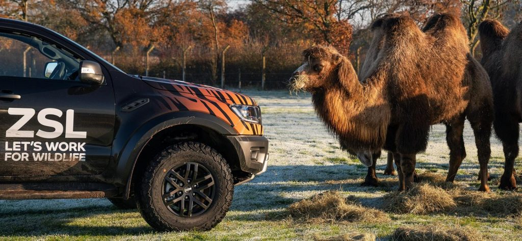 Ford Ranger Raptor at Whipsnade Zoo